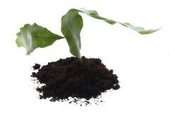 Planta creciente en suelo fotografía de archivo