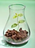 Planta creciente en un tubo de prueba Fotografía de archivo libre de regalías