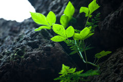 A planta cresce Imagem de Stock Royalty Free