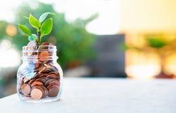 A planta cresce acima no dinheiro imagens de stock royalty free