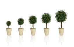 Planta crescente Foto de Stock
