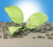 Planta crescente Imagem de Stock