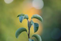 Planta crescente Fotografia de Stock