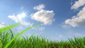 Planta crescente contra o fundo do céu ilustração royalty free