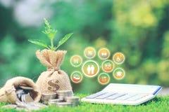 A planta crescente no dinheiro ensaca com a pilha de dinheiro e de hologra das moedas ilustração royalty free