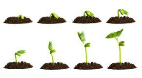 Planta crescente no solo foto de stock
