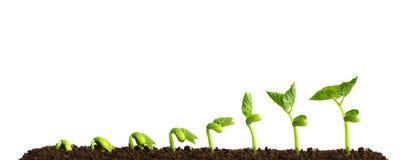 Planta crescente no solo imagens de stock royalty free