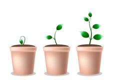 Planta crescente nova em um potenciômetro Imagem de Stock