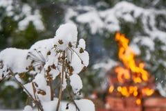 Planta cubierta con nieve Fotografía de archivo libre de regalías