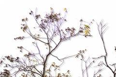 planta 3D de florescência fotografia de stock royalty free