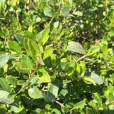 Planta da árvore Imagens de Stock Royalty Free