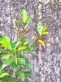 A planta da árvore no muro de cimento da quebra Imagem de Stock Royalty Free