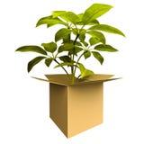 Planta da caixa da ecologia Foto de Stock