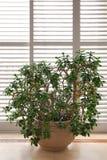 Planta da casa Fotografia de Stock
