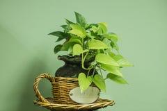 Planta da casa em um potenciômetro Imagens de Stock