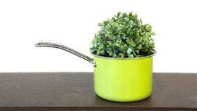 Planta da casa em um potenciômetro verde imagem de stock royalty free
