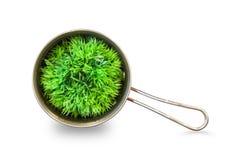 Planta da casa - planta decorativa em um potenciômetro fotografia de stock royalty free