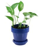 Planta da casa verde fotos de stock royalty free