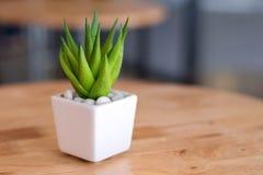 Planta da decoração Fotografia de Stock