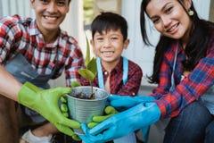 Planta da exibição do pai e do filho ao jardinar em casa imagens de stock royalty free
