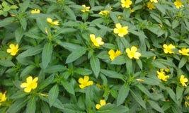 Planta da flor fotos de stock