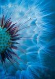Planta da flor do dente-de-leão foto de stock royalty free