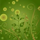 Planta da folha Imagens de Stock