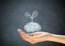 Planta da garatuja na mão humana Imagem de Stock