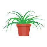 Planta da grama no potenciômetro de flor Planta home da decoração Imagens de Stock Royalty Free
