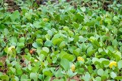 Planta da grama verde na praia Imagem de Stock
