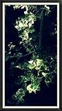 Planta da iluminação Imagens de Stock Royalty Free