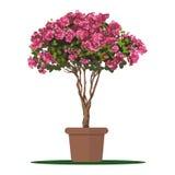 Planta da ilustração do vetor no potenciômetro Fotos de Stock Royalty Free