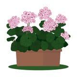 Planta da ilustração do vetor no potenciômetro Fotografia de Stock Royalty Free