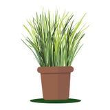 Planta da ilustração do vetor no potenciômetro Foto de Stock Royalty Free