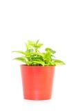 Planta da janela foto de stock
