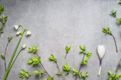 Planta da mola com snowdrops, flores dos açafrões e galhos da mola, vista superior Foto de Stock Royalty Free