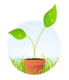 Planta da mola no potenciômetro Fotos de Stock