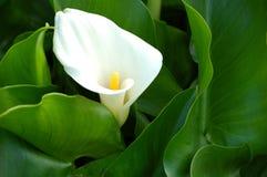 Planta da natureza Imagem de Stock Royalty Free
