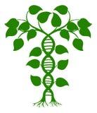 Planta da natureza do ADN ilustração royalty free