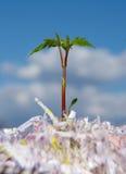 Planta da plântula de Eco que cresce acima da papelada no fundo do céu Imagens de Stock Royalty Free