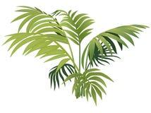 Planta da samambaia Imagem de Stock Royalty Free