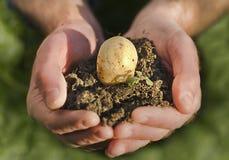 Planta da terra arrendada da mão Imagem de Stock Royalty Free