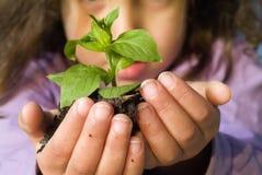 Planta da terra arrendada da menina Imagem de Stock