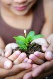 Planta da terra arrendada da menina Foto de Stock