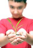 Planta da terra arrendada do menino nas mãos Fotos de Stock
