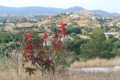 Planta de óleo de rícino nas montanhas fotografia de stock
