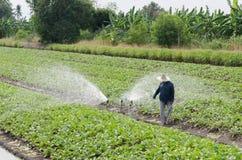 Planta de agua del granjero Fotos de archivo