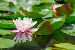 Planta de agua hermosa Imagen de archivo