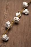 Planta de algodão Imagem de Stock