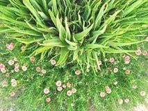 Planta de Alovero fotos de archivo